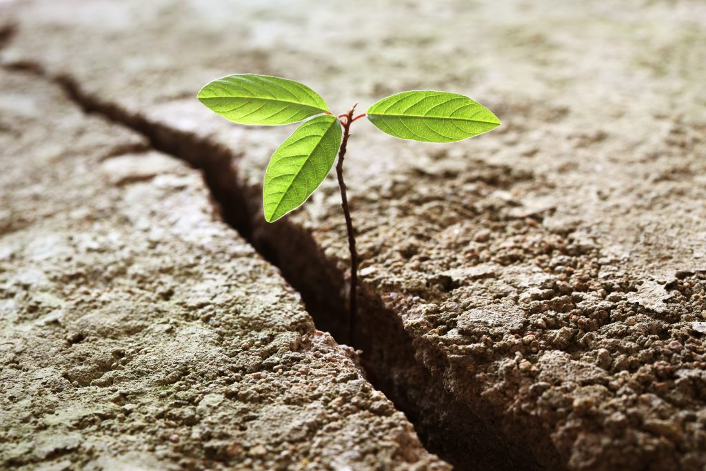 a sprout grows out of a crack to represent change